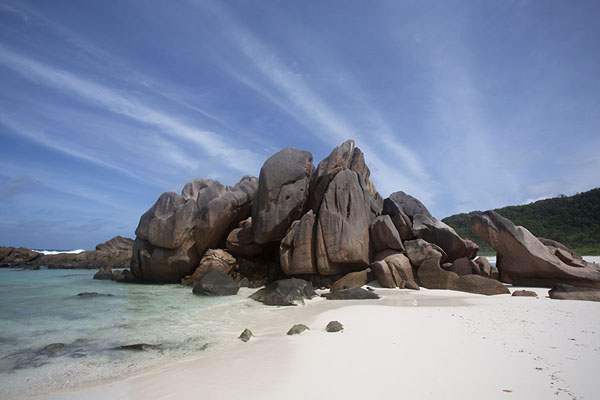 Picture of Seychelles, La Digue: palmtree at Grande Anse