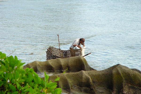 Picture of Fishing with a bamboo basketSeychelles - Seychelles