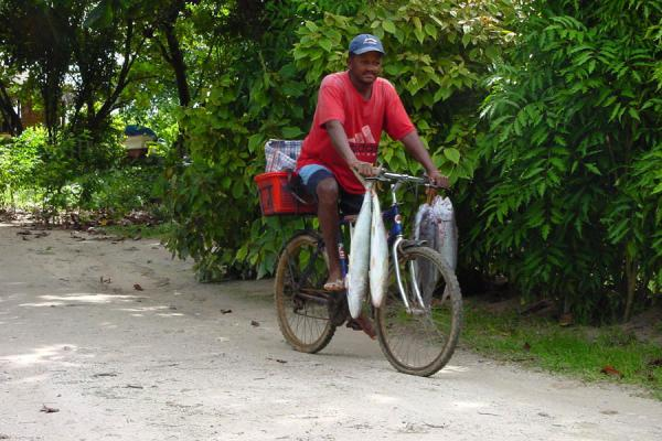 Picture of Seychelles Fishing (Seychelles): Cycling with fish, La Digue