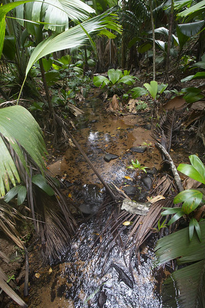 Light shining through this long leaf | Vallée de Mai | Seychelles