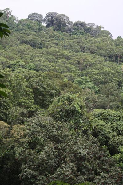 Picture of Bukit Timah Nature Reserve (Singapore): Glimpse over Bukit Timah