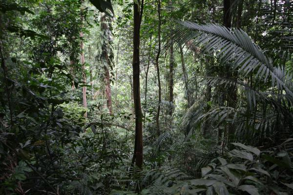 Picture of Bukit Timah Nature Reserve (Singapore): Pristine rainforest in Bukit Timah