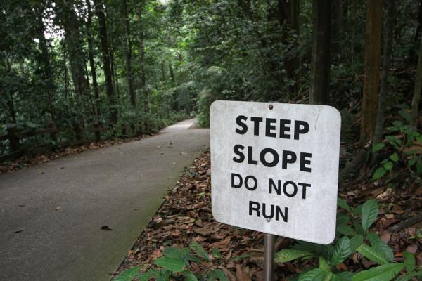 Joggers went down backwards on this slope | Bukit Timah Nature Reserve | Singapore