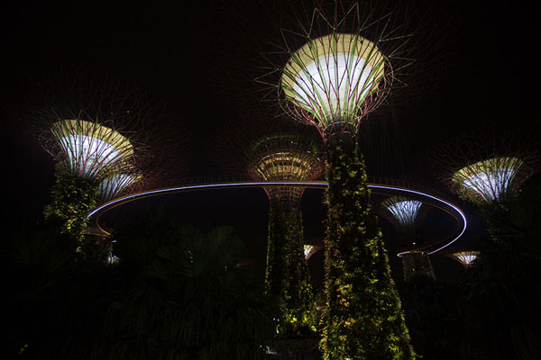 Night view of the mam-made trees and the Skywalk in the Supertree Grove | Gardens by the Bay | Singapore