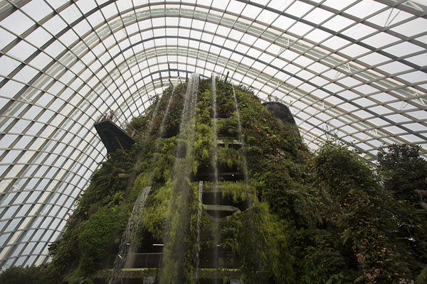 Looking up the waterfall in the Cloudforest | Gardens by the Bay | Singapour