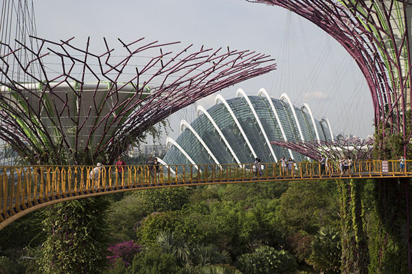 Foto de The man-made trees with the Cloudforest in the background, seen from the skywalkGardens by the Bay - Singapur