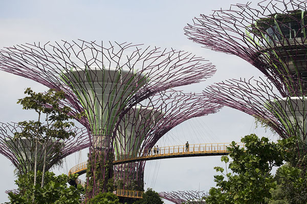 Looking up the giant trees of Supertree Grove with skywalk | Gardens by the Bay | Singapour