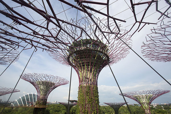 The Supertree Grove | Gardens by the Bay | Singapour
