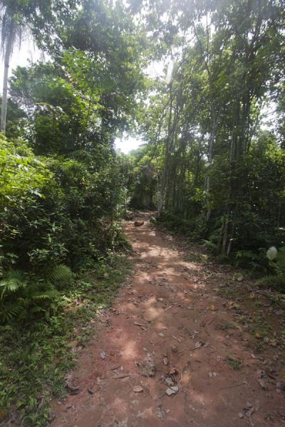Foto di Trail on Pulau UbinPulau Ubin - Singapore