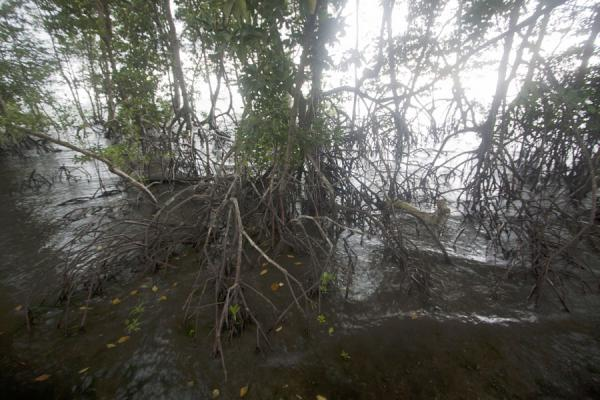 Picture of Chek Jawa wetlands contains a sizable mangrove forest