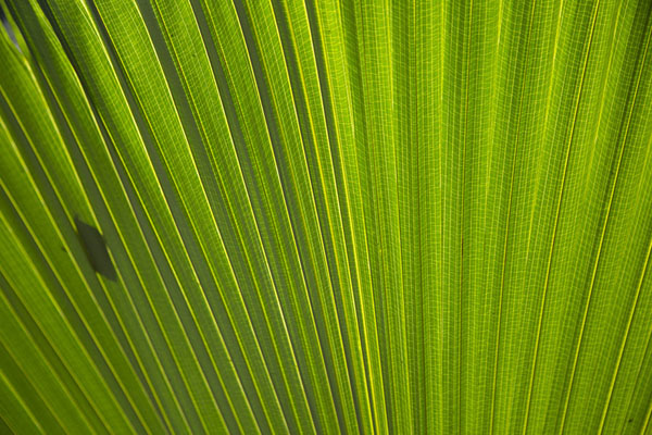 Close-up of enormous leaf | Singapore Botanic Gardens | Singapour