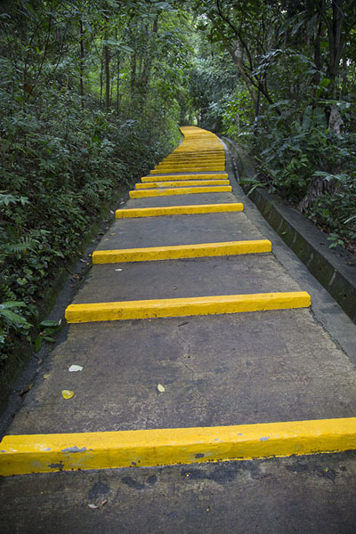 Trail with stairs through Kent Ridge Park | Southern ridges | Singapore