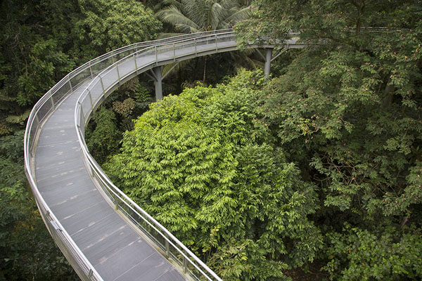 Forest walk in Telok Blangah Hill Park | Southern ridges | Singapore