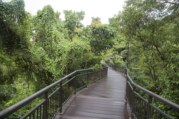 Canopy walk in Kent Ridge Park | Southern ridges | 新加玻