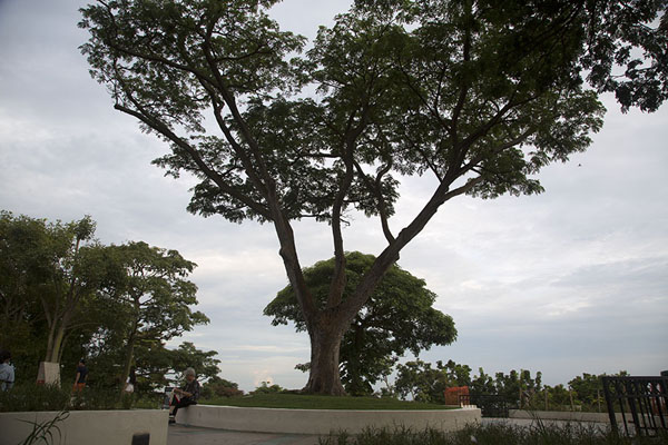 The summit of Mount Faber with huge tree - 新加玻 - 亚洲