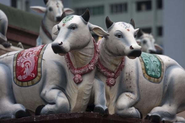 Close-up of two cows sculpted on the wall of Sri Mariamman temple | Tempio di Sri Mariamman | Singapore