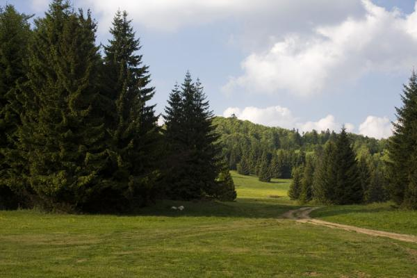 Picture of Trail leading through a landscape of trees and meadows in the south of Slovak Paradise