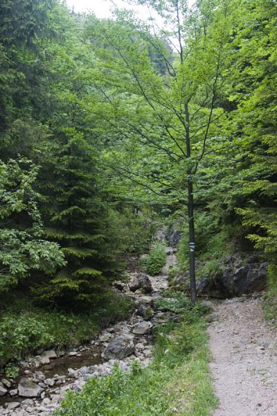 Picture of Slovak Paradise National Park (Slovakia): One of the many trails in Slovak Paradise or Slovenský Raj