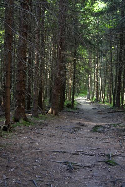 Picture of Slovak Paradise National Park (Slovakia): Woods along a trail in Slovak Paradise