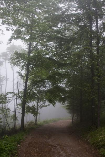 Picture of Slovak Paradise National Park (Slovakia): Trees on a foggy day in Slovak Paradise
