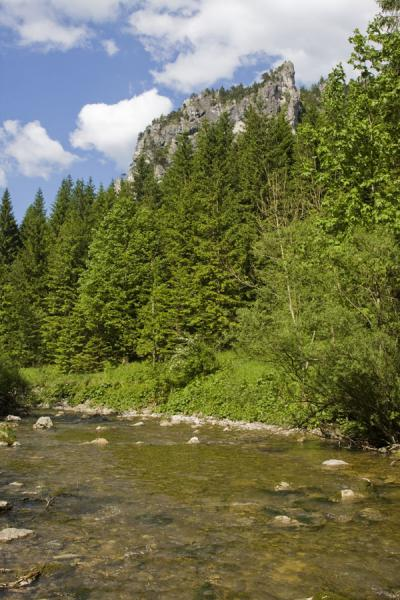 Picture of Vrátňanka brook surrounded by trees and rock formations near Tiesňavy gorge