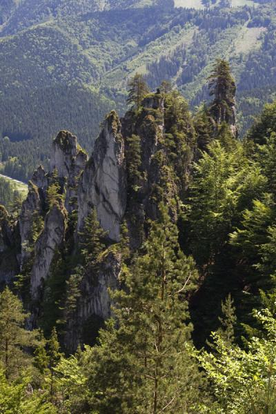 Picture of Vrátna valley (Slovakia): Vertical rocks and trees in Vrátna Valley