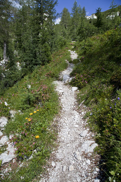 Trail to the summit of Ojstrica | Logarska Dolina | Slovenia