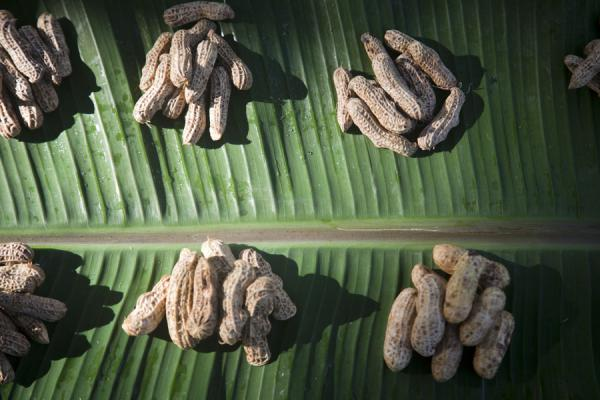 Peanuts for sale on a leaf | Marché de Gizo | Iles Salomon