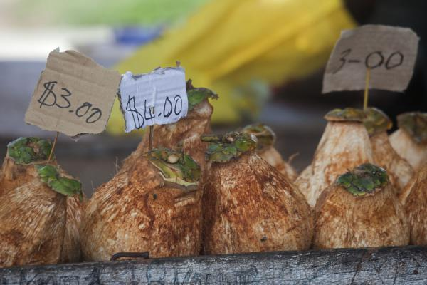Coconuts come in sizes and are priced accordingly | Mercato di Gizo | Isole Salomone