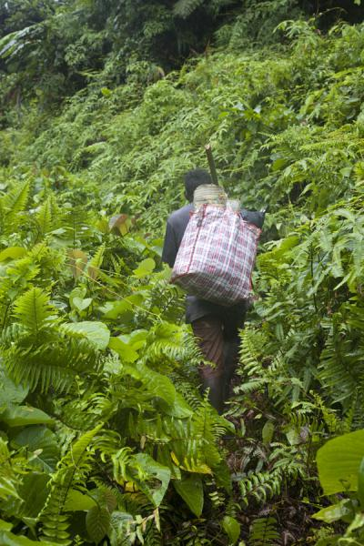 Picture of Kolombangara climb (Solomon Islands): Walking up the Kolombangara