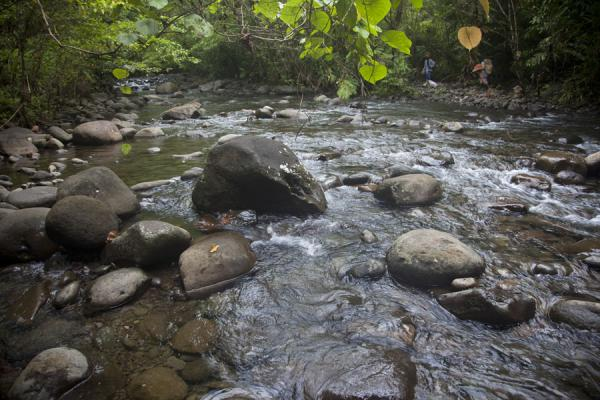 Picture of Kolombangara climb (Solomon Islands): River crossing in the early stretches of the hike up Mount Kolombangara