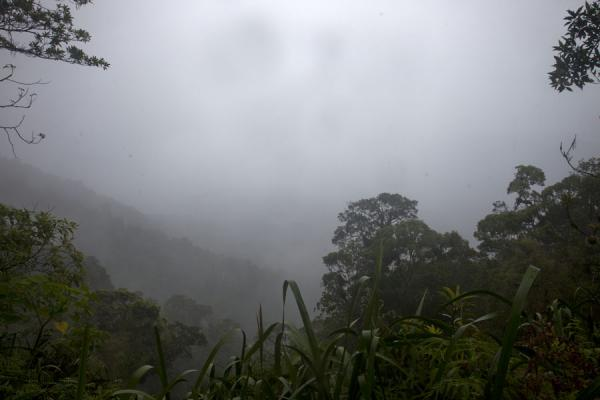 Picture of Kolombangara climb (Solomon Islands): View of the crater on a cloudy and rainy morning