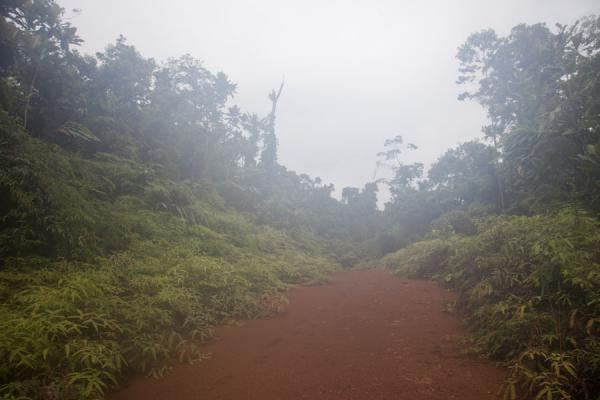 Picture of Kolombangara climb (Solomon Islands): Easier stretch of the hike up Mount Kolombangara