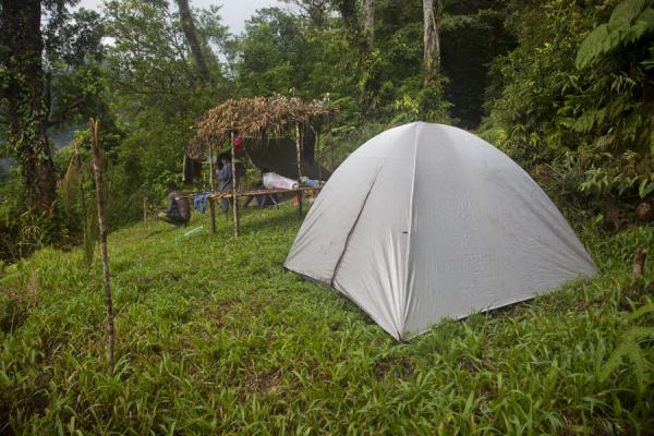 Picture of Kolombangara climb (Solomon Islands): View of Professor Camp on the first day