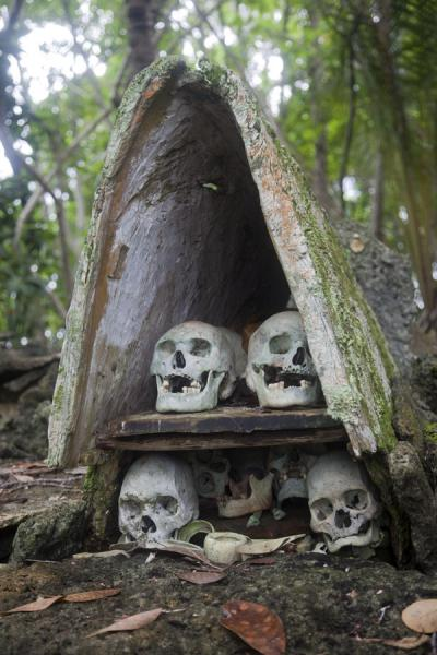 Picture of Skull island (Solomon Islands): Small house with skulls of Big Men, or chiefs, on top of the shrine on Skull Island