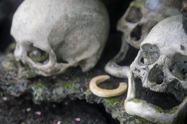 Photo de Iles Salomon (Skulls and shell money in a niche on the repository on Skull Island)