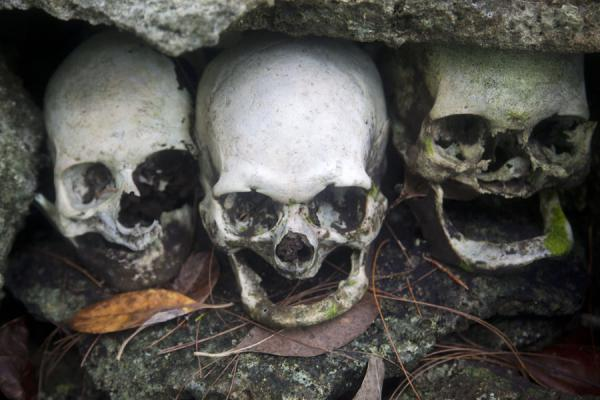 Picture of Three skulls in a row in a niche on the repository of skulls on Skull IslandMunda - Solomon Islands