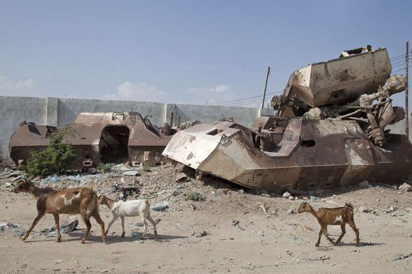 Goats walking past the armoured personnel carriers marking the Black Hawk Down site | Black Hawk Down site | Somalia