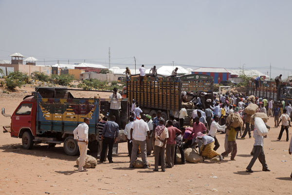 Picture of People swarming around the trucks filled with qatMogadishu - Somalia