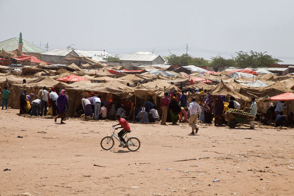 The qat market gets busy after the arrival of the trucks | Marché de qat de Mogadiscio | Somalie