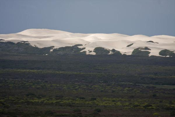 The sand dunes of De Hoop towering above the fynbos vlei landscape | Reserva natural De Hoop | Africa del Sur