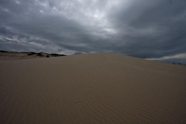 Looking up a sand dune of De Hoop Nature Reserve | De Hoop Nature Reserve | South Africa