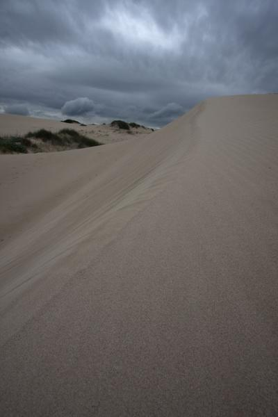Sand dune at De Hoop Nature Reserve at Koppie Alleen | De Hoop Nature Reserve | South Africa