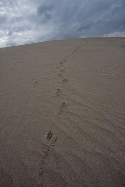 Footprints in a sand dune of De Hoop Reserve | De Hoop Nature Reserve | South Africa