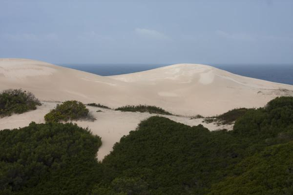 Foto de White sand dunes with the Indian Ocean in the backgroundReserva natural De Hoop - Africa del Sur