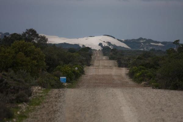 Gravel road towards the sand dunes of De Hoop Reserve | Reserva natural De Hoop | Africa del Sur