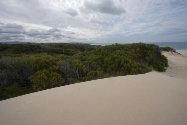 Sand dunes and vegetation at the coastline of De Hoop Reserve near Koppie Alleen | Reserva natural De Hoop | Africa del Sur