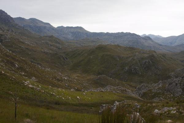 Picture of View of the landscape of Hottentots Holland reserve