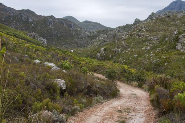 Picture of Hottentots Holland Nature Reserve (South Africa): Dirt track and fynbos in the mountains of Hottentots Holland reserve