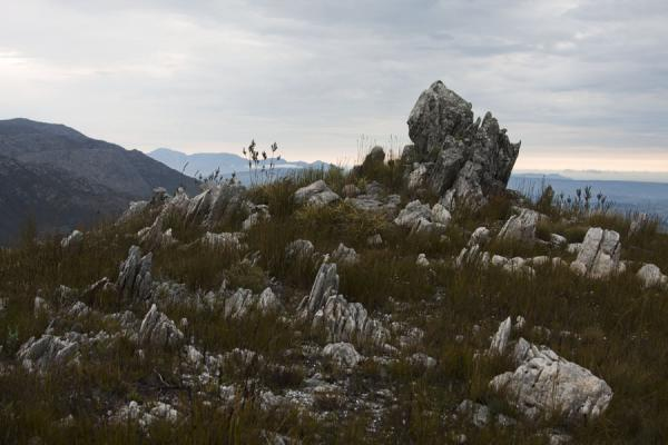 Picture of Rocks sticking out of the fynbos of Hottentots Holland reserve